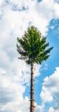 στάση ψηλός Στοκ φωτογραφία με δικαίωμα ελεύθερης χρήσης