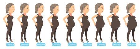 Στάδια εγκυμοσύνης διανυσματική απεικόνιση