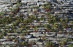 Στέγες Trulli σε Alberobello Άποψη των σπιτιών Trulli Τα παραδοσιακά σπίτια Trulli στην πόλη Alberobello, Πούλια, Ιταλία - Immagi στοκ εικόνες με δικαίωμα ελεύθερης χρήσης