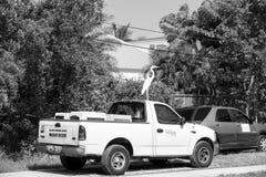 Στέγη αυτοκινήτων που σταθμεύουν στην οδική πλευρά με το άσπρο πουλί, τσικνιάς Στοκ εικόνα με δικαίωμα ελεύθερης χρήσης