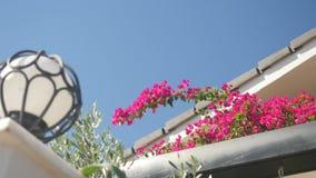 Στέγη λουλουδιών Begonville brach ouse στο υπόβαθρο απόθεμα βίντεο