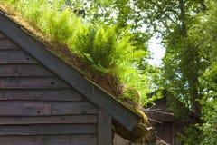 Στέγη σπιτιών που καλύπτεται με το βρύο Στοκ Εικόνες