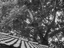 Στέγη στο πάρκο του Βιετνάμ με τον κήπο πολλών δέντρων Στοκ φωτογραφία με δικαίωμα ελεύθερης χρήσης