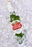 Στέλλα Artois Beer στον πάγο Στοκ φωτογραφία με δικαίωμα ελεύθερης χρήσης