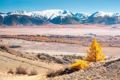 Στέπα Kurai το φθινόπωρο, βουνά Altai, Σιβηρία, Ρωσία στοκ εικόνα με δικαίωμα ελεύθερης χρήσης