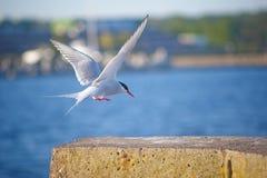 στέρνα ποταμών Στοκ Φωτογραφίες