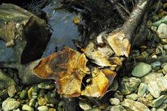 Στέλεχος του τέμνοντος έλατου στο δάσος taiga Στοκ Φωτογραφίες
