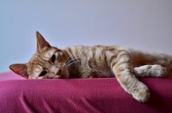 Στήριξη γατακιών Στοκ Φωτογραφία