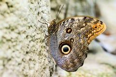 στήριξη πεταλούδων Στοκ εικόνες με δικαίωμα ελεύθερης χρήσης