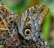 στήριξη πεταλούδων Στοκ Φωτογραφίες