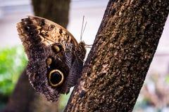 στήριξη πεταλούδων στοκ φωτογραφία με δικαίωμα ελεύθερης χρήσης