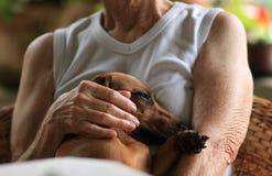 Στήριξη σκυλιών στοκ εικόνες