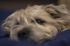 Στήριξη σκυλιών Στοκ φωτογραφίες με δικαίωμα ελεύθερης χρήσης