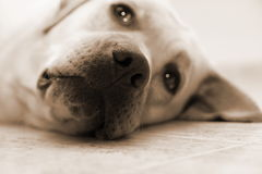 στήριξη σκυλιών Στοκ φωτογραφία με δικαίωμα ελεύθερης χρήσης