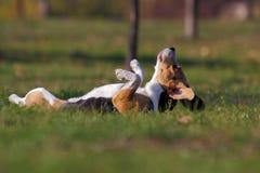 Στήριξη σκυλιών Στοκ εικόνα με δικαίωμα ελεύθερης χρήσης
