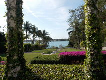 Στήλες που καλύπτονται στα φύλλα και μια ωκεάνια άποψη στοκ εικόνα με δικαίωμα ελεύθερης χρήσης