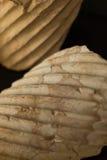 στήλες Ρωμαίος Στοκ εικόνα με δικαίωμα ελεύθερης χρήσης