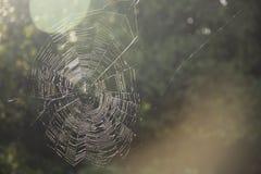 Σταγονίδια νερού σε έναν Ιστό αραχνών στη φύση, ιστός αράχνης Στοκ Φωτογραφίες