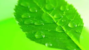 Σταγονίδια στο πράσινο φύλλο στοκ φωτογραφίες με δικαίωμα ελεύθερης χρήσης