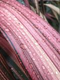 Σταγονίδια νερού στην επιφάνεια ενός φύλλου Στοκ Φωτογραφίες