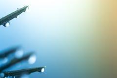 Σταγονίδια νερού στον κλάδο χριστουγεννιάτικων δέντρων Στοκ Εικόνες