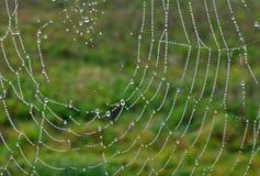 Σταγονίδια στον ιστό αράχνης Στοκ φωτογραφία με δικαίωμα ελεύθερης χρήσης