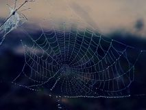 Σταγονίδιο νερού σε Spiderweb σε χειμερινά ξημερώματα στοκ φωτογραφίες