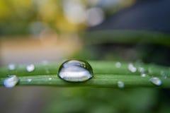 Σταγόνα βροχής στο πράσινο φύλλο στην ευρεία μακροεντολή γωνίας στοκ εικόνες