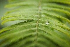 Σταγόνα βροχής Στοκ Φωτογραφία
