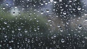 Σταγόνες βροχής κάτω από τον ανεμοφράκτη απόθεμα βίντεο