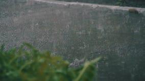 Σταγόνες βροχής που αφορούν σκληρά την άσφαλτο στο πάρκο απόθεμα βίντεο
