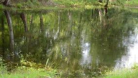 Σταγόνες βροχής που αφορούν το ήρεμο νερό επιφάνειας που διαμορφώνει τους κύκλους νερού απόθεμα βίντεο