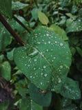 Σταγόνες βροχής σε ένα πράσινο φύλλο στοκ εικόνα με δικαίωμα ελεύθερης χρήσης