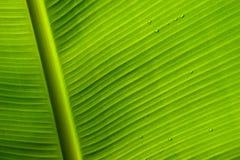 Σταγόνες βροχής σε ένα πράσινο φύλλο Στοκ Εικόνες