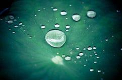 Σταγόνες βροχής σε ένα φύλλο λωτού Στοκ εικόνα με δικαίωμα ελεύθερης χρήσης