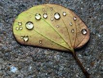 Σταγόνες βροχής σε ένα φύλλο Στοκ εικόνα με δικαίωμα ελεύθερης χρήσης
