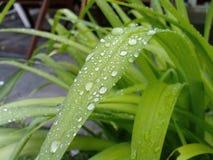Σταγόνες βροχής σε ένα φύλλο Στοκ Εικόνες