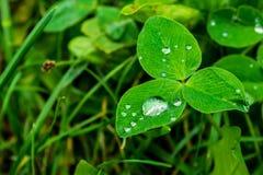 Σταγόνες βροχής σε μια πράσινη κινηματογράφηση σε πρώτο πλάνο φύλλων Πτώσεις του νερού σε μια μακροεντολή πράσινων εγκαταστάσεων Στοκ φωτογραφίες με δικαίωμα ελεύθερης χρήσης