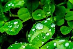 Σταγόνες βροχής σε μια πράσινη κινηματογράφηση σε πρώτο πλάνο φύλλων Πτώσεις του νερού σε μια μακροεντολή πράσινων εγκαταστάσεων Στοκ Εικόνες