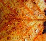 Σταγόνες βροχής στην επιφάνεια του φύλλου φθινοπώρου Στοκ Εικόνες