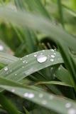 Σταγόνες βροχής στις λεπίδες της χλόης Στοκ Φωτογραφίες