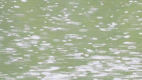 Σταγόνες βροχής στον ποταμό το καλοκαίρι απόθεμα βίντεο