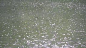 Σταγόνες βροχής στον ποταμό το καλοκαίρι φιλμ μικρού μήκους