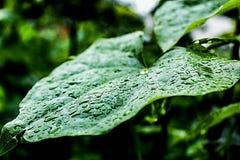σταγόνες βροχής στο φύλλο στοκ φωτογραφία με δικαίωμα ελεύθερης χρήσης