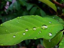 Σταγόνες βροχής στο φύλλο Στοκ Εικόνα