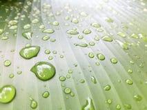 σταγόνες βροχής φύλλων Σταγονίδια νερού στο φύλλο μπανανών Στοκ φωτογραφία με δικαίωμα ελεύθερης χρήσης