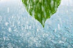 σταγόνες βροχής φύλλων Στοκ φωτογραφίες με δικαίωμα ελεύθερης χρήσης