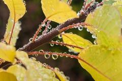 σταγόνες βροχής φύλλων φθ Στοκ Εικόνες