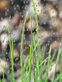 σταγόνες βροχής χλόης Στοκ φωτογραφίες με δικαίωμα ελεύθερης χρήσης