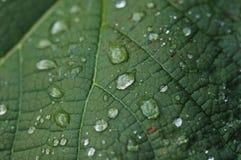 σταγόνες βροχής Στοκ Εικόνες